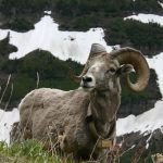 KyleBondo.com - Fewer Unicorns, More Mountain Goats