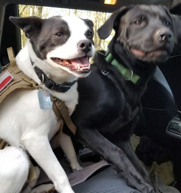 NaPoWriMo Day 29 - The Brotherhood of Mutts