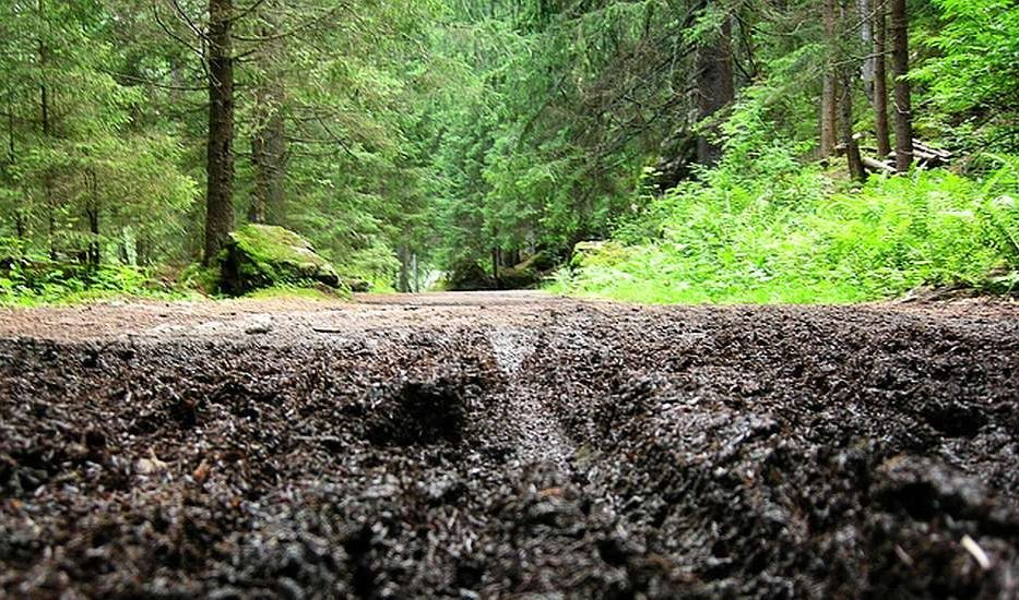 Trail damage occurs when mountain bike riders ignore conditions and ride on wet trails (2015).