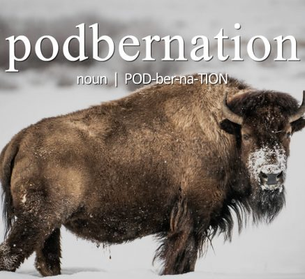 Podbernation (n) (POD-ber-na-TION) — The break between seasonal episodes that toys with your content consumption addiction.