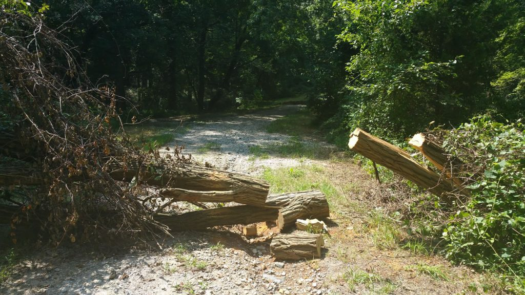 KyleBondo.com - A classic scenario that Trailgrinder could solve: A tree down on the trail.